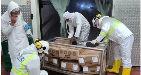 Hong Kong y Costa de Marfil recibirán primeras toneladas de carne de cerdo colombiana