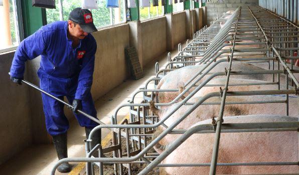 Anuncian extensión del Proyecto de Cooperación entre  Colombia y Dinamarca para el sector porcino