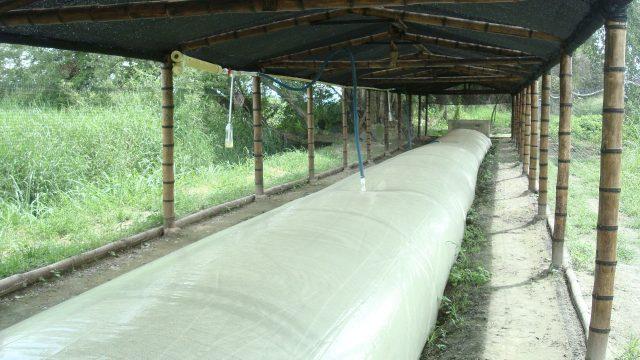 Minambiente y sector porcicultor le apuestan a la energía sostenible mediante aprovechamiento del estiércol de cerdo
